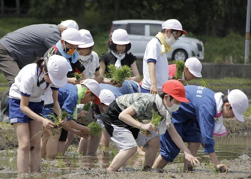 秋の収穫 楽しみ 黄海小5年生 田植え体験【一関】